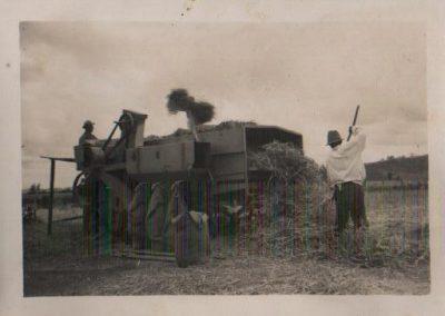 Historia Playa Maqui Lodge - Cosecha del grano